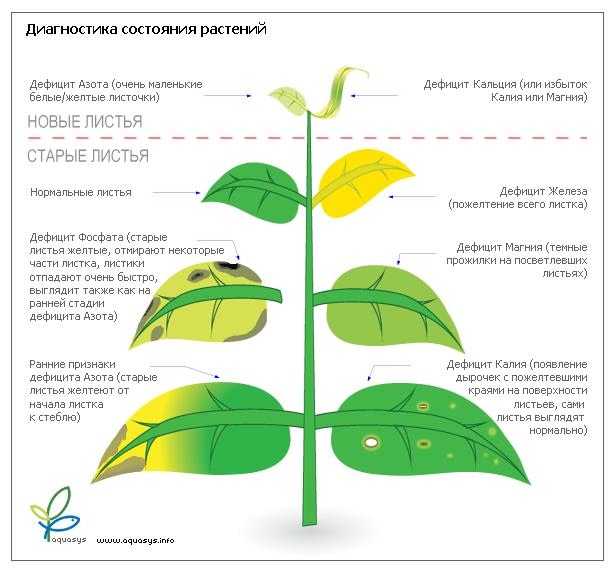 Наглядное пособие состояния растения