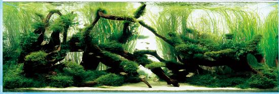 Коряги в аквариуме декорированы растениями