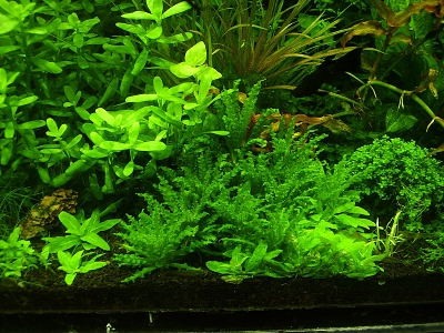 /images/product_images/info_images/pic/aquasys-element-co2-3l_1.jpg