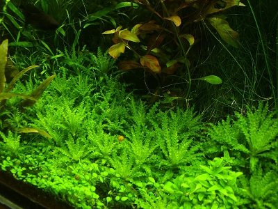 /images/product_images/info_images/pic/aquasys-element-co2-3l_2.jpg