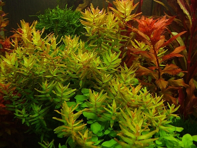 /images/product_images/info_images/pic/aquasys-macro-p+k-3l_1.jpg
