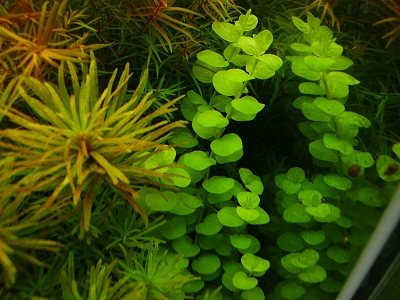 /images/product_images/info_images/pic/aquasys-microk-3-l_3.jpg